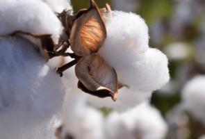 alice balice | matières premières naturelles